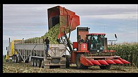 Pasco Basin Sweet Corn Harvest